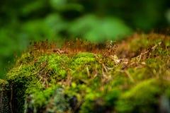 Grön mossa och gult gräs på ett träd i skogen arkivbild