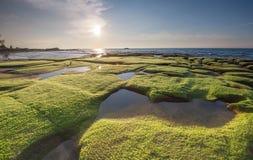 Grön mossa- och solnedgångbakgrund Arkivbilder
