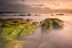 Grön mossa- och solnedgångbakgrund Arkivfoto