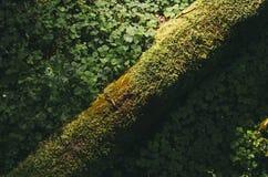 Grön mossa och vegetation på skoggolv fotografering för bildbyråer