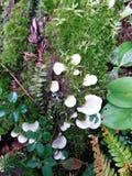 Grön mossa och vit svamp Arkivfoto