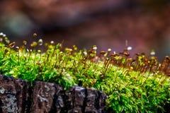 Grön mossa på cutted träd royaltyfri bild