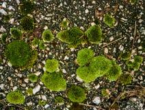 Grön mossa på defocused bokeh Arkivfoton