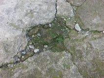 Grön mossa på den gamla väggen Royaltyfria Bilder