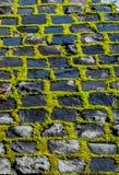 Grön mossa på den stenlade vägen Royaltyfria Foton