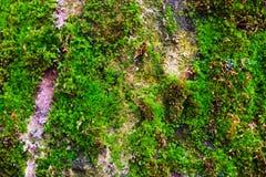 Grön mossa på en grå stenvägg royaltyfri fotografi