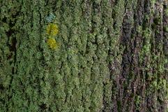 Grön mossa på ett trädskäll Arkivbild