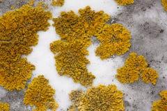 Grön mossa på grå färgstenen Arkivbilder
