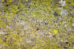 Grön mossa på grungetextur arkivfoto
