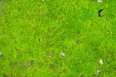 Grön mossa på konkret golv Arkivbilder