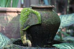 Grön mossa på krukmakerit i trädgården royaltyfria bilder