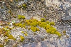 Grön mossa på stenarna Royaltyfri Bild