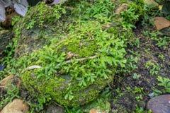 Grön mossa på stentexturbakgrunden Royaltyfri Fotografi