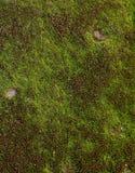 Grön mossa på tegelsten Royaltyfri Foto