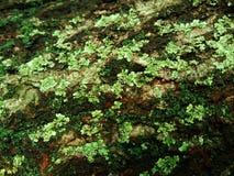 Grön mossa på trä arkivbild