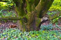 Grön mossa på trädstammen Fotografering för Bildbyråer