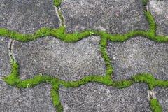 grön mossa på trottoartegelplattan i parkera Arkivfoto