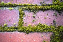 Grön mossa på väggen för röd tegelsten Arkivbild