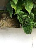 Grön mossa på vit som en bred gräns royaltyfri foto