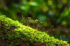 Grön mossa som växer på den murkna trädstammen Royaltyfri Fotografi
