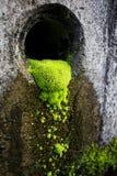 Grön mossa växer i polen Arkivfoton