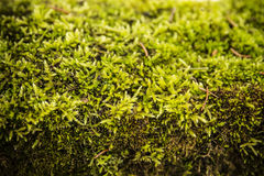 Grön mossaabstrakt begreppbakgrund Royaltyfria Bilder