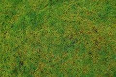 Grön mossanaturbakgrund Arkivbilder