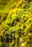 Grön mossatextur Fotografering för Bildbyråer