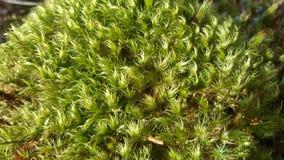 Grön mossatextur och bakgrund arkivbilder