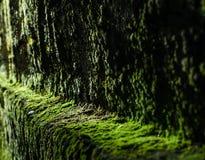 Grön mossatextur på den gamla stenväggen, bakgrund royaltyfri fotografi