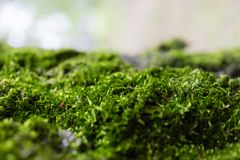 Grön mosscloseup Royaltyfria Bilder