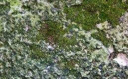 Grön mossig stentexturnärbild arkivbild