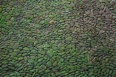 Grön Mosstegelstenvägg arkivfoto