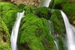 grön mossvattenfall Fotografering för Bildbyråer