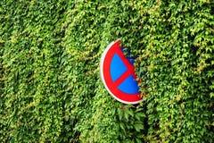 Grön murgröna med vägmärket Royaltyfri Fotografi
