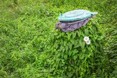 Grön murgröna som slås in fullständigt i facket Natursegrar över allt fotografering för bildbyråer
