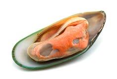 grön mussla Arkivbild