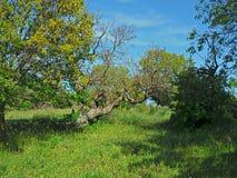 grön natur Royaltyfri Bild