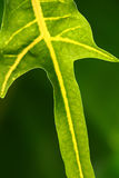 grön natur Arkivfoton