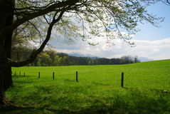 grön natur Arkivfoto