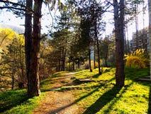 grön natur Royaltyfri Foto