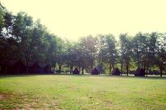 grön natur arkivbilder