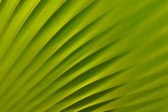 grön natur för bakgrund Arkivfoto