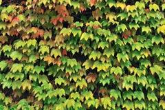 grön natur för bakgrund Royaltyfri Fotografi