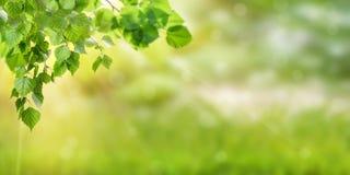 grön natur för bakgrund Arkivfoton
