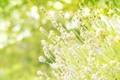 grön natur för bakgrund Arkivbilder