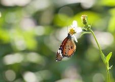 grön natur för fjäril Arkivbilder