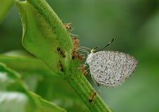 grön natur för fjäril Arkivfoton