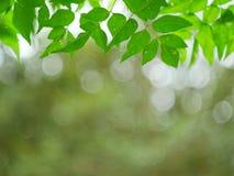 Grön naturabstrakt begreppbakgrund från bladvindslag i skogen, grön bokeh ut ur fokusbakgrund från naturskog Royaltyfri Foto
