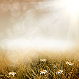 Grön naturbakgrund Arkivfoton